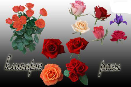 Растровый Клипарт для Фотошопа - Розы