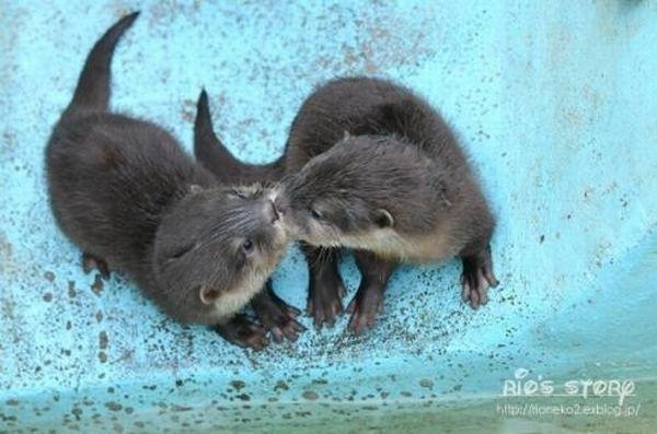 Животные проявляют теплые чувства друг к другу