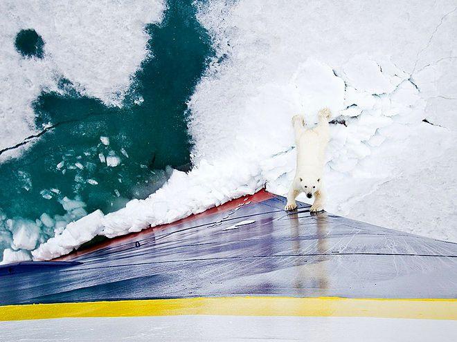 Лучшие фотографии конца 2010 года от National Geographic