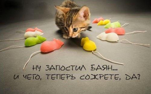 Котовасия....