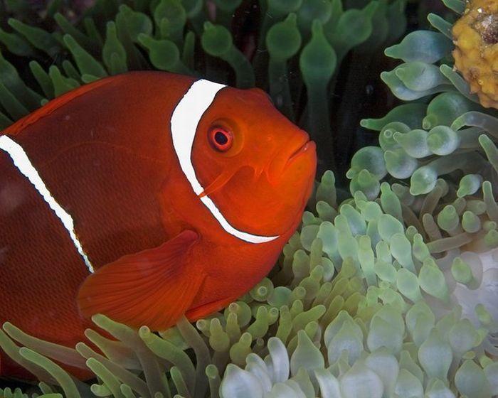 Замечательный подводный мир