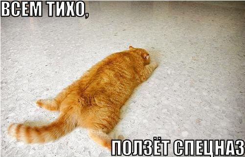 Смешные котята с надписями