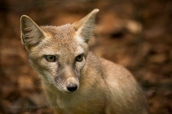 Фауна . Фотограф Ambre Jaraud-Darnault