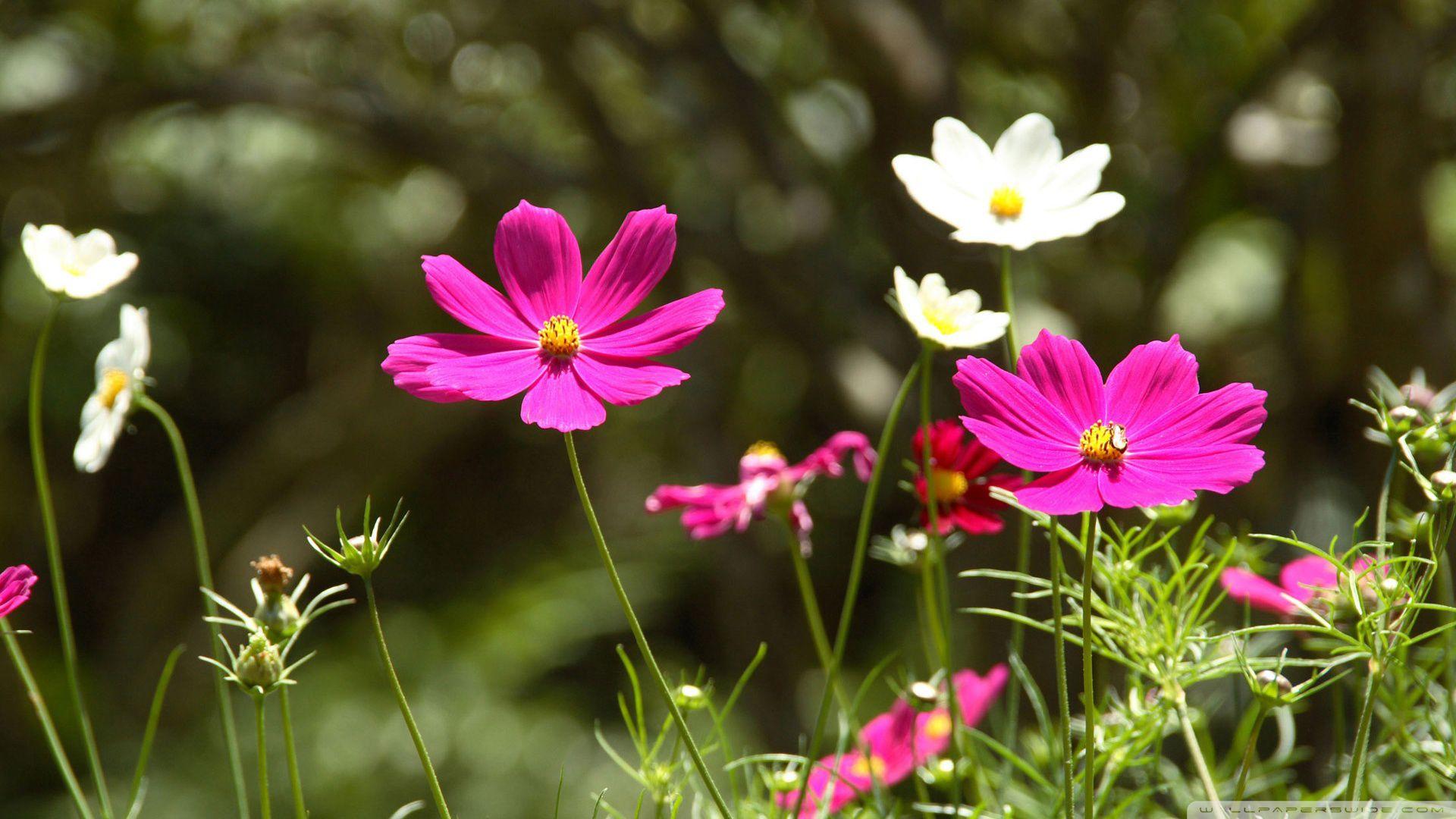 Цветок в природе