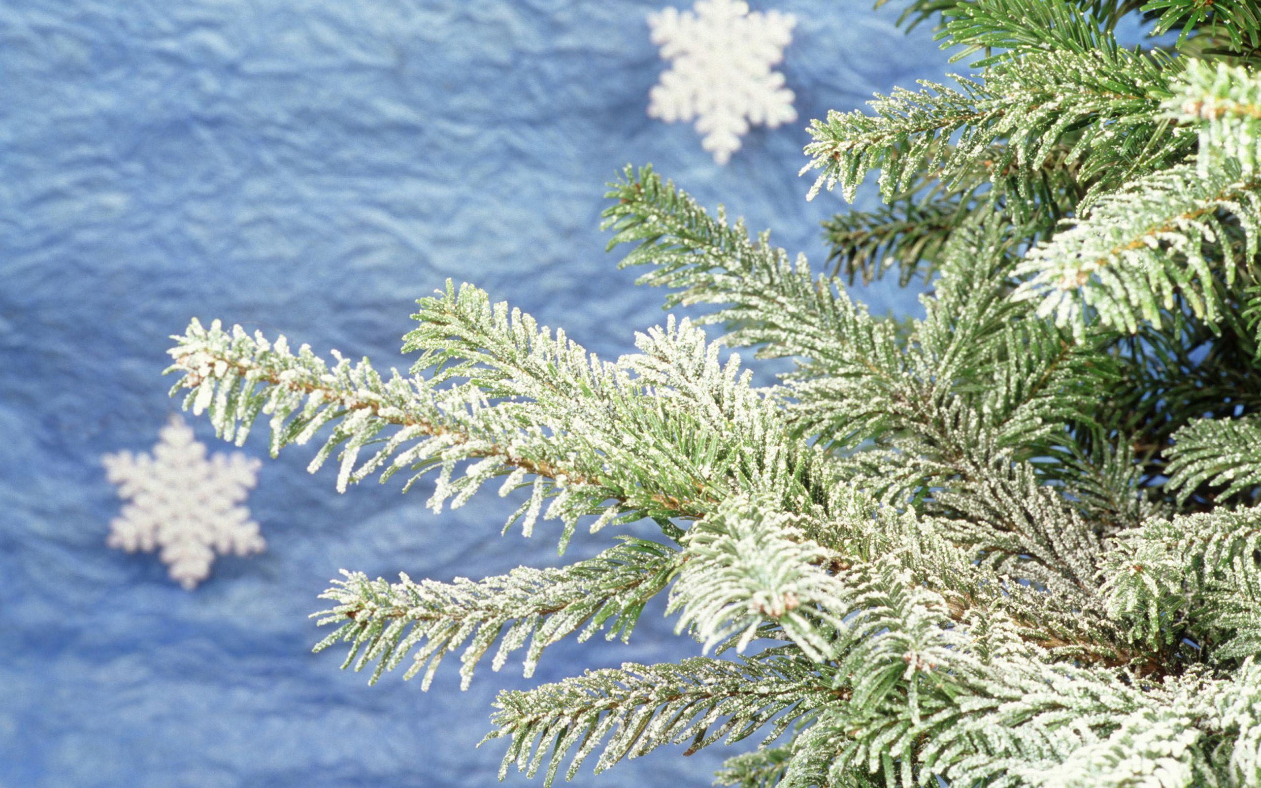 каталоге картинки на рабочий стол снег на елках купить