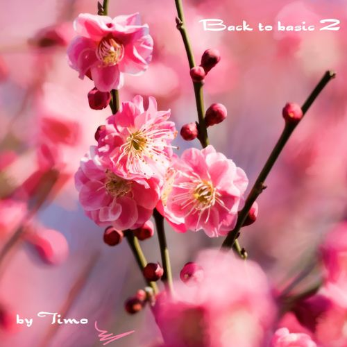 Timo - Back to Basic 2 (2012)