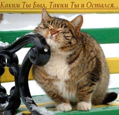06830-80543932-cats_firefun_ru_.jpg