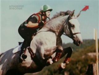 ��� �������� �������� / Animal Miracles [01-41] (2002) SATRip | DUB