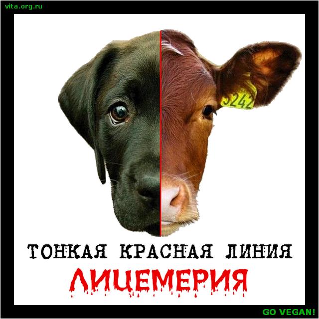 tonkaya_krasnaya_liniya_licemeriya_2.png