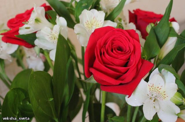 розы3.jpg