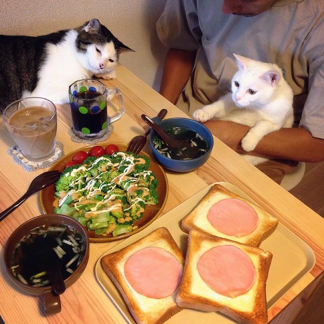 Обед по-японски 1