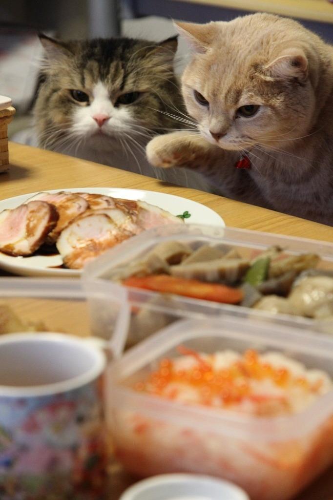 Коты дегустаторы 1