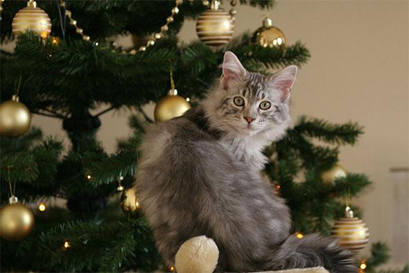 Фотографии новогодних котов 1
