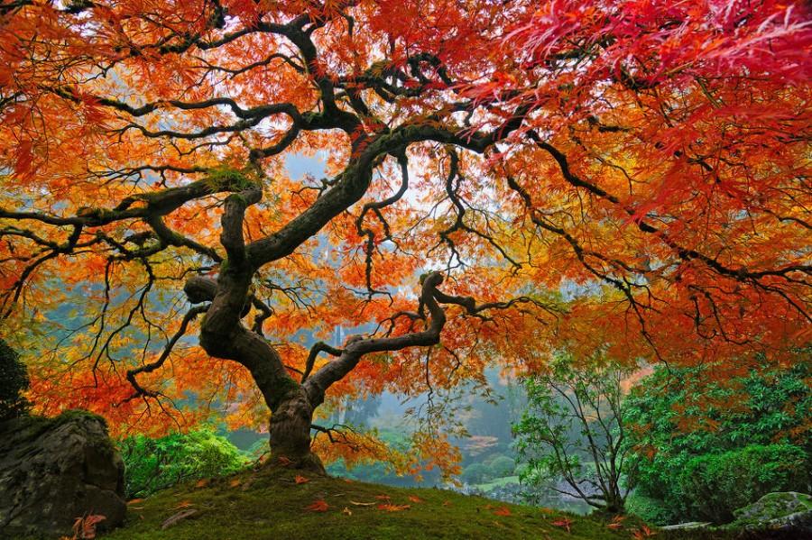 Очень красивое дерево