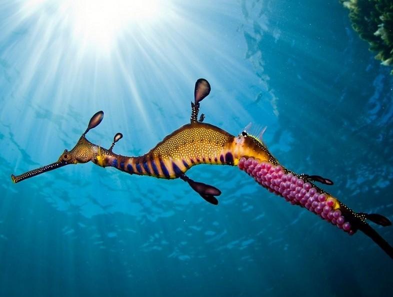 Подводный обитатель