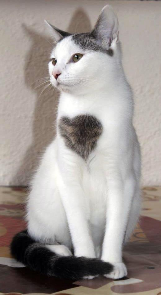 Сердечный котейка