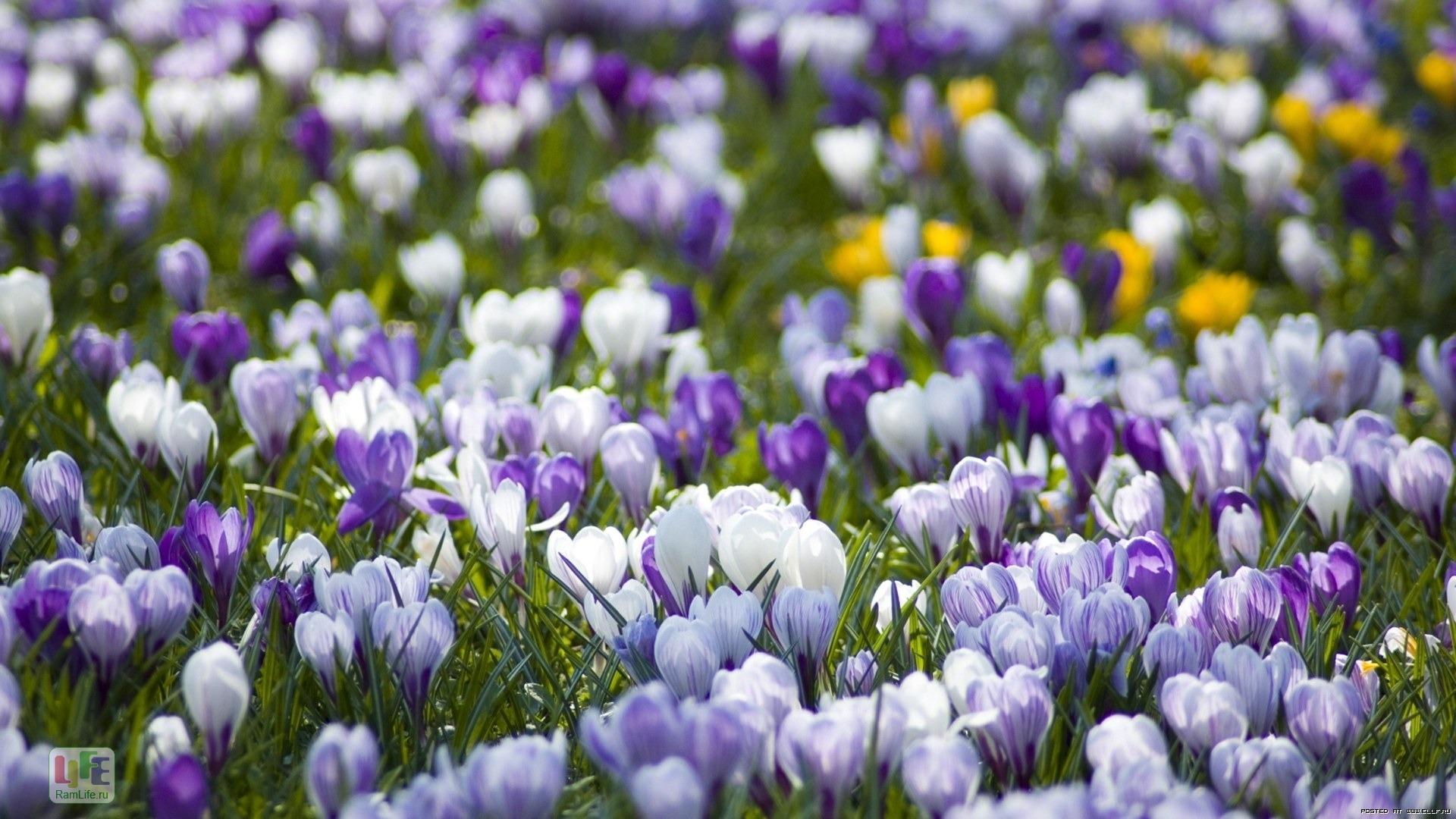 Весна пришла картинки на dom-cvety.com | 1080x1920
