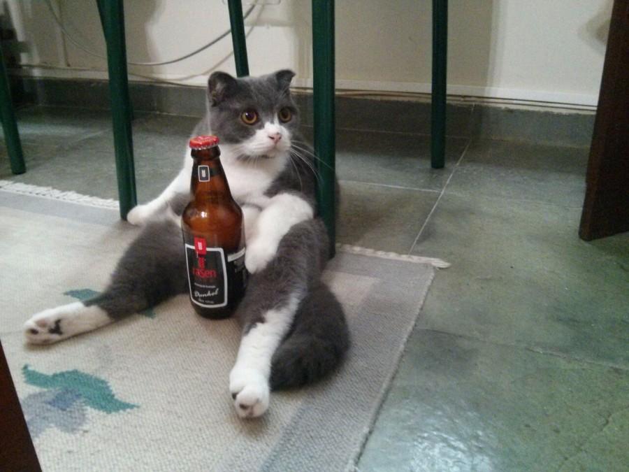 Котейка с бутылкой