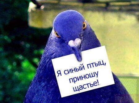 """Птичка"""
