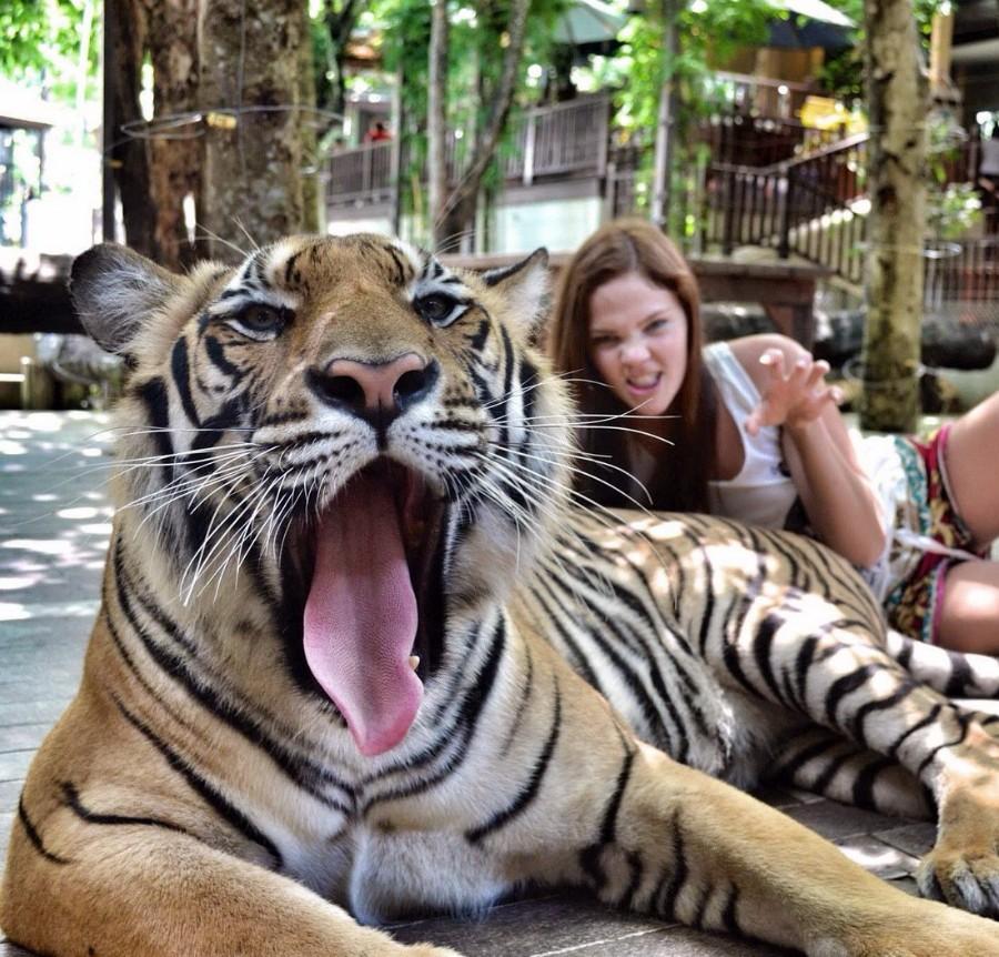 Тигриный зев