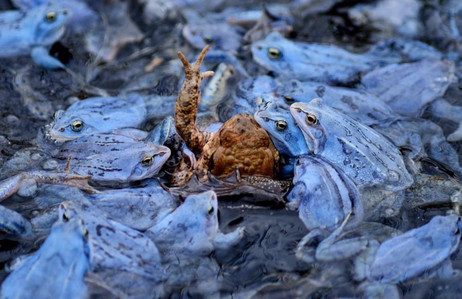 Лягушки и жаба