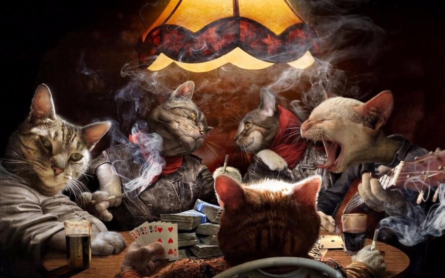 Коты играют в покер