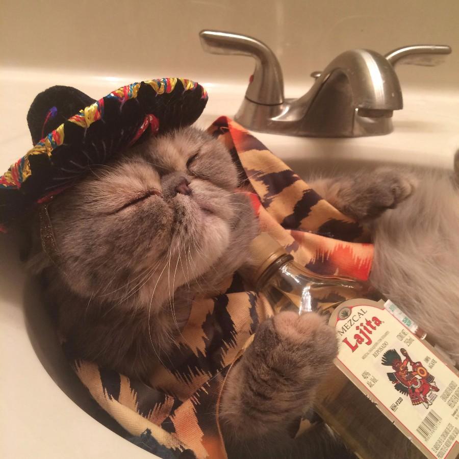 Кот-мексиканец