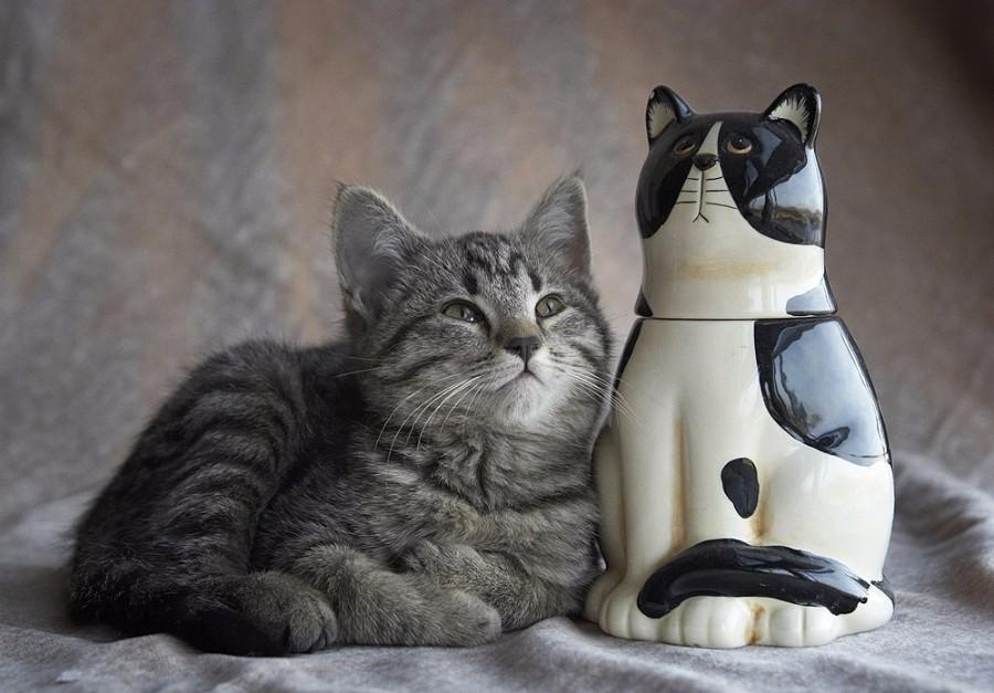Серый котейка
