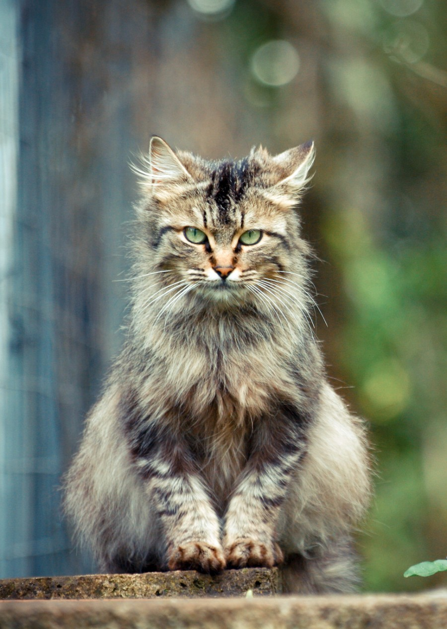 Дерзкий дворовый кот