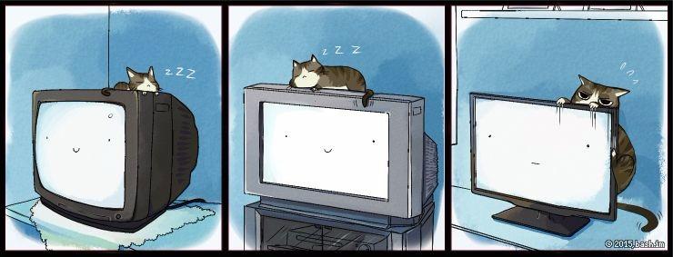 Взросление кота