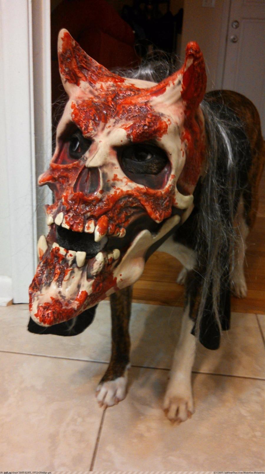 Шикарная маска для пса