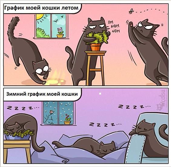 График кошки