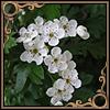 http://i1.imageban.ru/out/2016/01/19/ca0844d86499953f049107084a8af8a6.jpg