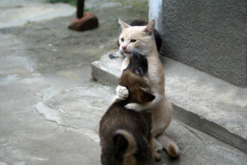 Дружба навеки. Коты втрескались в собак