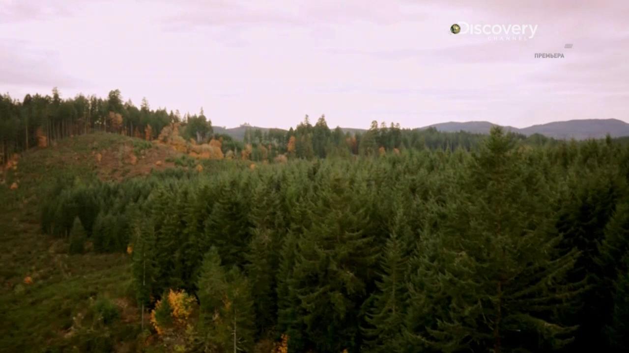 Discovery. Охота на трюфели [01-04 серии] | HDTVRip 720p