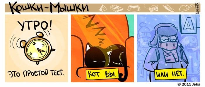 Тест на кота