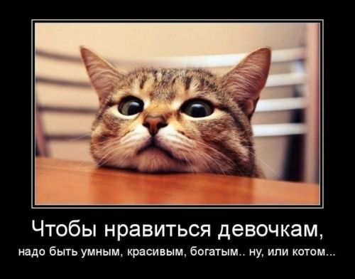 http://i1.imageban.ru/out/2016/03/10/6d7048f8b8920589e37b22cbfe5cdeaf.jpg