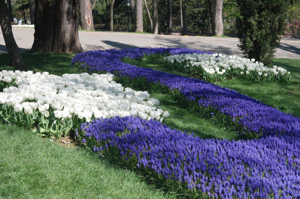 Цветы в городских дворах