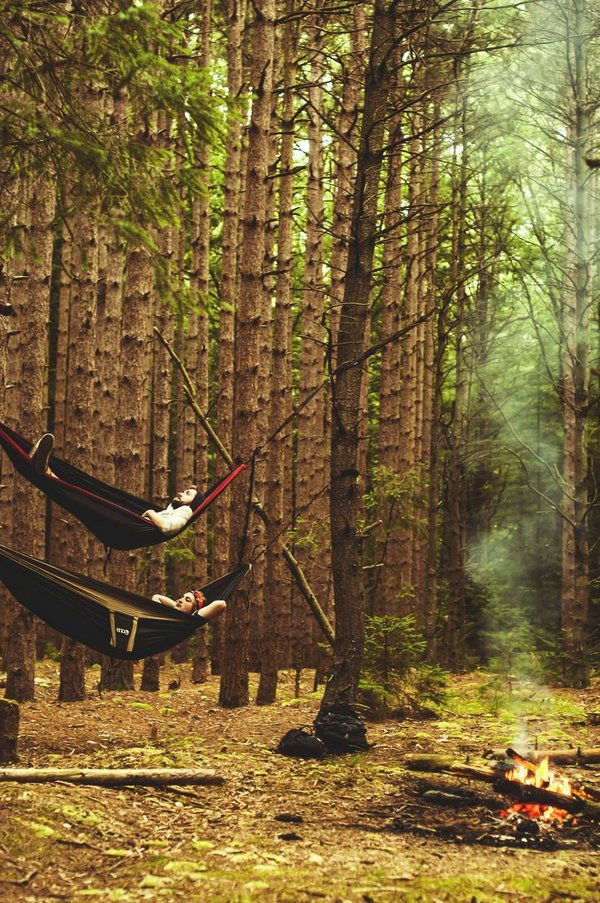 Отдых в лесу 1