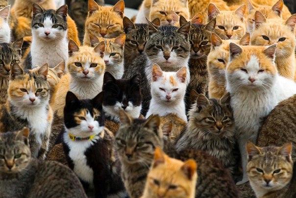На острове кошек 1