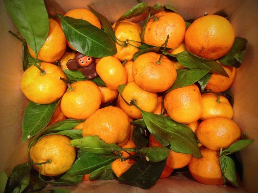 Чебурашка в мандаринах