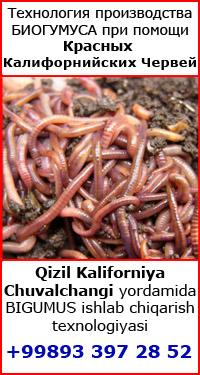Производство биогумуса при помощи красных калифорнийских червей в Узбекистане Qizil Kaliforniya Chuvalchangi yordamida O'zbekistonda BIGUMUS ishlab chiqarish texnologiyasi