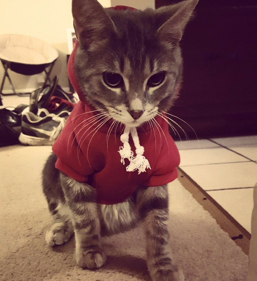 Котейка в толстовке