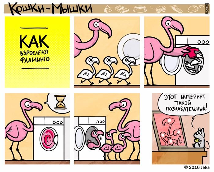 Как взрослеют фламинго