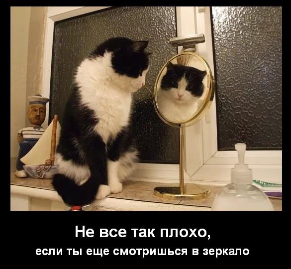 http://i1.imageban.ru/out/2017/07/13/b50457e714e7667ef019c672f4877903.png