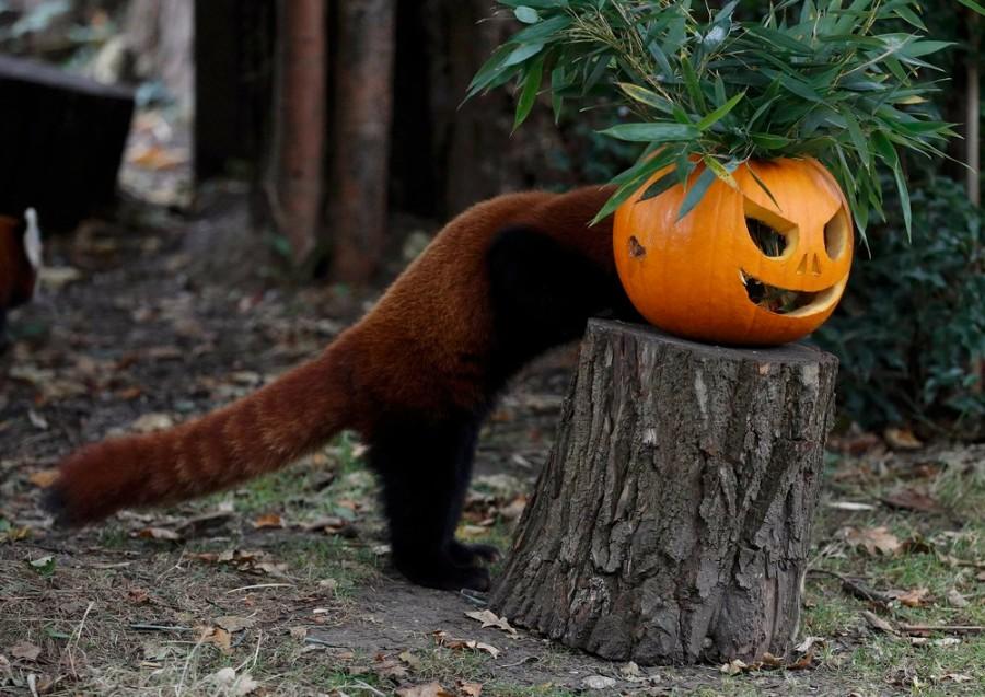 На тему Хеллоуина