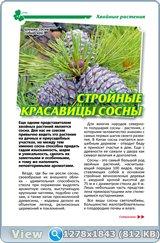 http://i1.imageban.ru/out/2017/12/03/832feec80f001b32955ed26afe02f27c.jpg