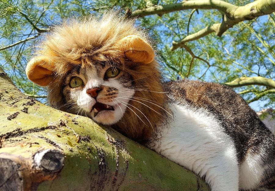 Я лев, а не котик