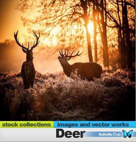 Растровый клипарт - Fotolia - Deer [JPG]