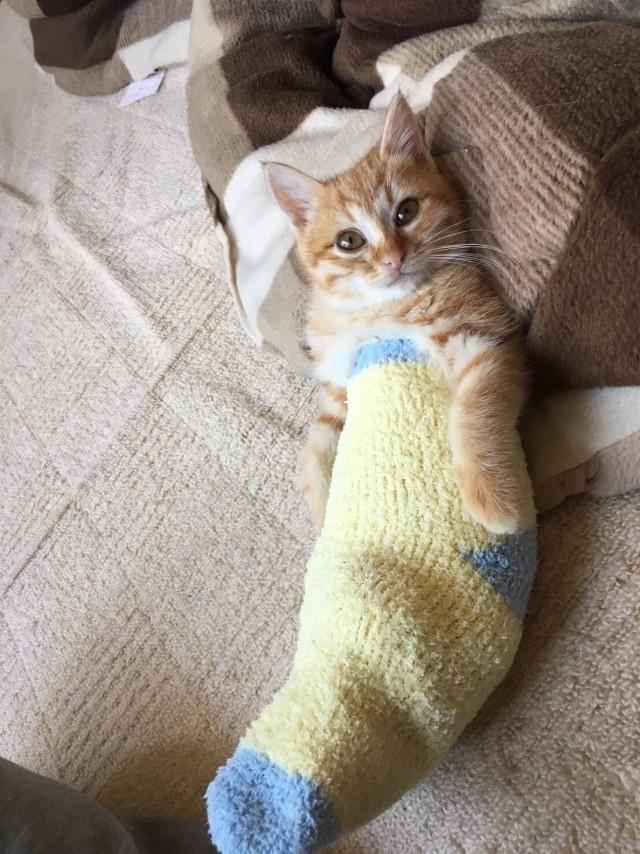 Просто котенок в носке